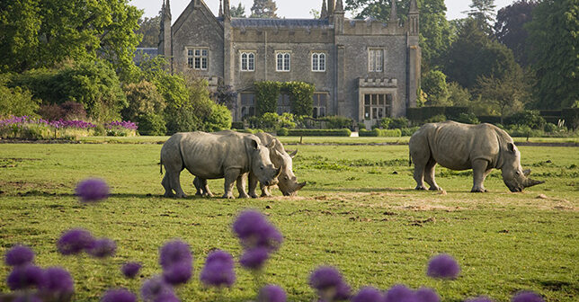 rhinos at Cotswold Wildlife par