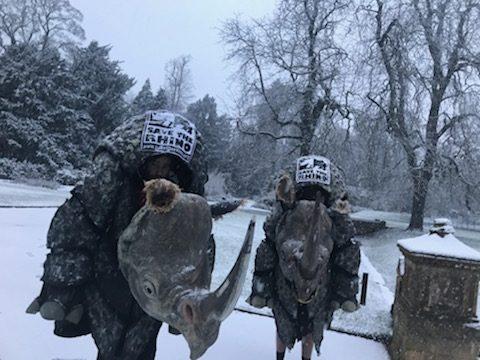 Rhinos Running in the snow!